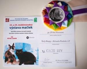 Arès Navarocoons - diploma a kokarda CACIB