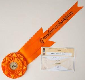 Arès Navarocoons - diploma a kokarda Grandinterchampion