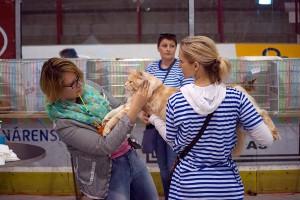 Výstava Star Cats 2015 v Praze
