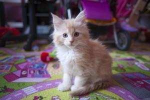 Naše koťata